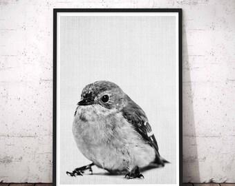 Bird Print, Woodland Printable Animal Prints, Bird Black and White, Bird Decorations, Nursery Decal, Honey Bird, Bird Art, Bird Wall Art