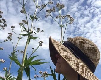 Valerian Tincture, Valeriana officinalis organic