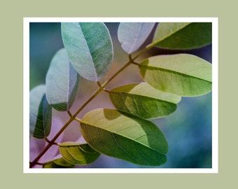 Rainbow leaf photo, leaf wall art, leaf photo print, pretty leaf art, fine art leaf print, leaf photography, colorful leaf photo