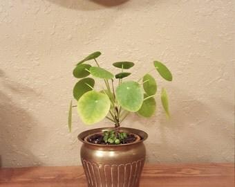 "Small vintage brass planter.  5.5"" planter / boho planter / vintage round planter"