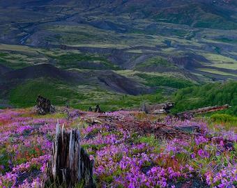 Glowing Cauldron - Mt St Helens, Wildflower, Volcano, Washington, National Monument, Mountain, Photo, Landscape