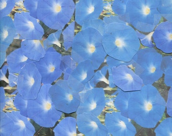 30...Dazzling...Heavenly Blue...morning glory seeds...for 2018 planting season...check out free seeds ...