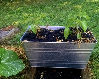 Large galvanized washtub planter, galvanized tub, metal tub, metal planter, garden planter, large planter tub, over sized galvanized planter