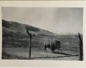 "Vintage Photo ""The Lost Buffalo"" Snapshot Antique Black & White Photograph Paper Found Ephemera Vernacular Interior Design Mood - 151"