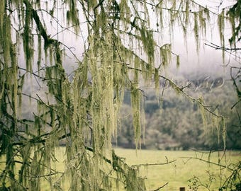 Country Landscape Photography, Mossy Tree Photo, Farm Field, Fog Photograph, Farmhouse Decor, Lichen Photo, Nature Photography, Rustic Photo