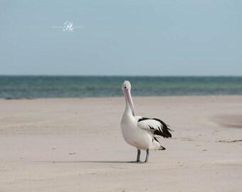 Bird Photography Australia, Photographic Print, Wall Art, Home Decor