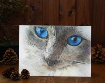 CUTE CAT Greeting Card - Gemma Hayward Art, cat, kitten, animal lover, cat lover, birthday, anniversary card
