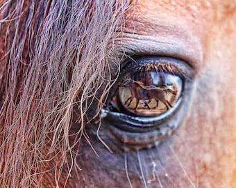 Horse Print, Horse Wall Art,  horse photography,