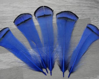 Set of 10 feathers pheasant Lady Armherst dyed Royal Blue