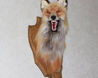 Siberian Red Fox - Taxidermy Head Shoulder Mount, Stuffed Animal For Sale - ST3943