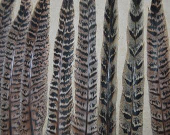 FG19 - Set of large feathers natural 3paires pheasant tail + 11/8plumes-30cms-(FG19)