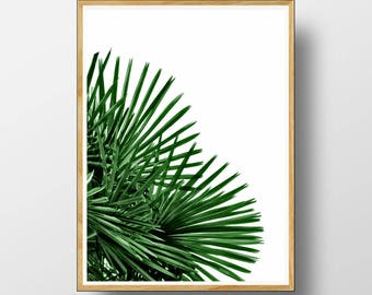Merveilleux Palm Leaf Print, Palm Leaf Wall Art, Palm Tree Decor, Tropical Print,