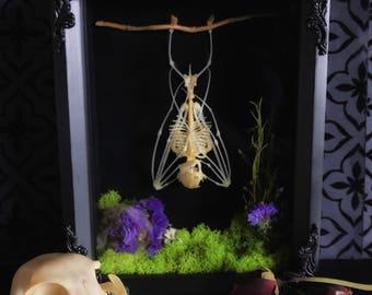 Victorian Hanging Bat Skeleton Forest Shadow Box, Taxidermy, Real Bat Skeleton, Memento Mori, Gothic Decor, Preserved Specimen, Oddity