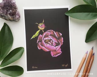 Peony Bud Botanical on Black Colored Pencil Art Print by Headspace Illustrations
