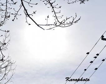Photograph of birds sitting in the Sun