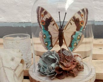 Butterfly, flower, wood and seashells under Bell glass curio cabinet