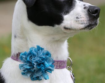 Fancy Dog Collar Flower
