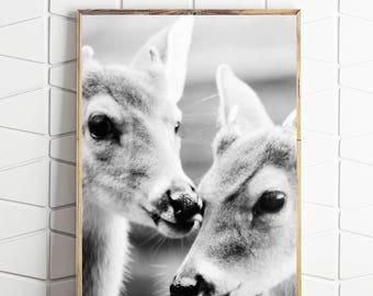 deer wall art, deer wall print, deer photography, deer download, deer wall decor, deer photo, deer poster, deer home wares, deer home decor