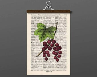 Pressure - red currant - antique book page
