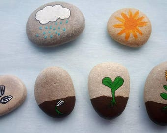 The lifecycle of a sunflower stones