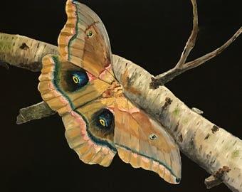 Silk Moth on Birch Original Oil Painting