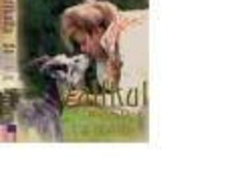 Vallkulla Book One  ISBN-13-978-0-9789854-1-7  ISBN-10-0-9789854-1-9
