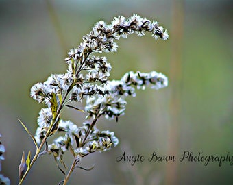 Printable Wall Decor   Stock Photo   Nature Photography   Instant Download   Personal or Commercial Use