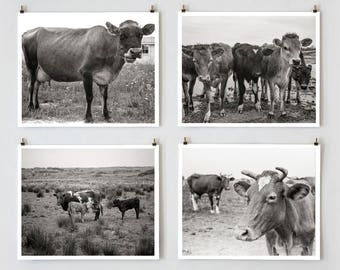Cow Wall Art, Cow Photography, Black and White, Farmhouse Modern, Country Wall Decor, Cow Decor, Farmhouse Wall Decor