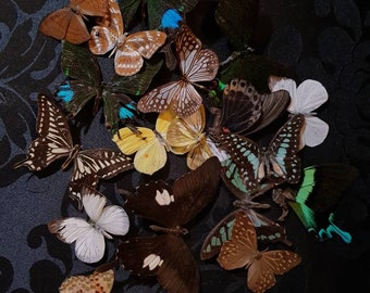 Miscellaneous butterflies reserved for Ashley