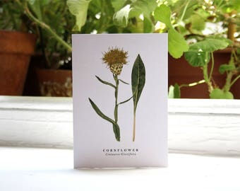 Cornflower: Botanical Print - Blank Greeting Card