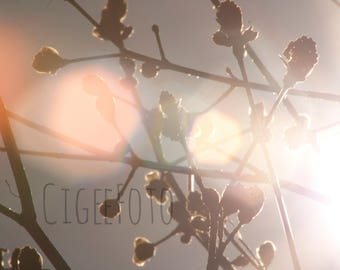 PHOTO (Big formats) - Tree buds, photography, nature, home decor, spring photography, Quebec
