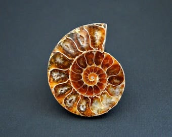 Ammonite  cabochon  40 x 33 x 4,5 mm
