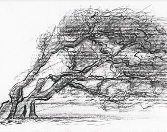 Sketch Storm tree - ink on paper