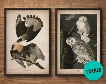 Audubon birds, Framed print set, Eagle print, Owl print, Audubon print, Birds of America, John James Audubon, Framed print, Wall art