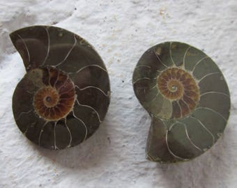 Ammonite. 2 Pcs. S0571