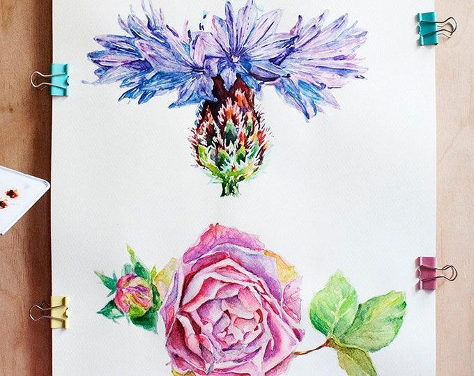 Rose Painting Original Watercolor Flower Rose Watercolor Art Flower Artwork Cornflower Flower Painting Rose Art Flower Watercolor Painting