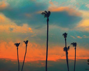 Five Palms Photo Print
