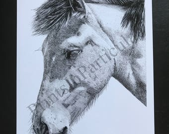 A4 Digital Print Reproduction of Horse Pencil Drawing