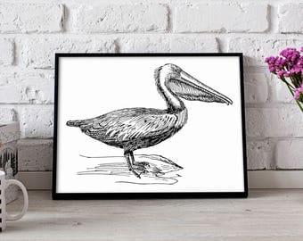 Pelican Bird poster, Pelican Bird wall art, Pelican Bird wall decor, Pelican Bird print