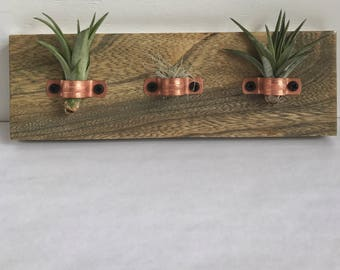 Air Plant Holder | Air Plant Wall Hanging | Wood Wall Hanging | Copper Air Plant Holder