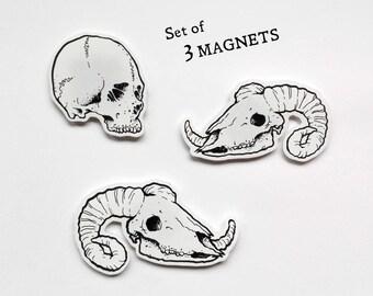 Set of 3 MAGNETS · skulls · handdrawn · shrink plastic · gift idea · dark · unique · home office