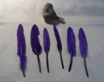 5 purple feathers decoration of various sizes for your creations