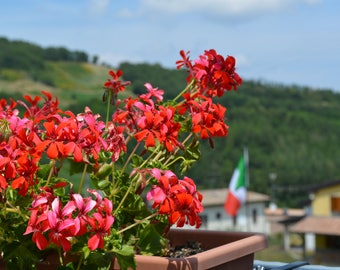 Flowers in the Tuscan Countryside Photo