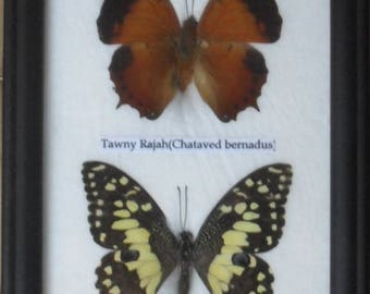 REAL 2 BEAUTIFUL Butterfly Collection InFrame