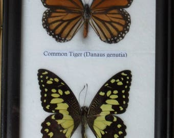REAL 2 Bautiful Butterfly Collection In Frame