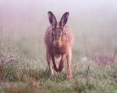 Hare in the Mist Blank Gr...