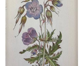 Botanical Print - Flowers of the Meadow - #3 Meadow Crane's-bill