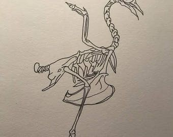 Bird Skeleton Drawing