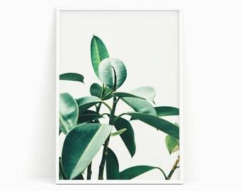 Botanical print, Green leaf print, Tropical print, Tropical wall art, Plant print, Plant photograph, Nature decor, Tropical decor, Plant art