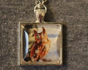 """Eastern Screech Owl """"Sammie Jo"""" Pendant Necklace"""